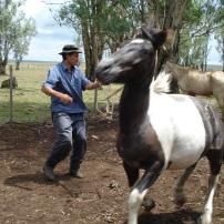 Tacoronte por ensillar / Tacoronte to saddle