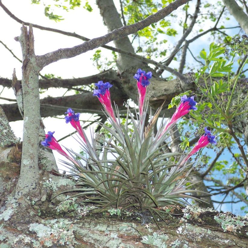 orquideas criollas